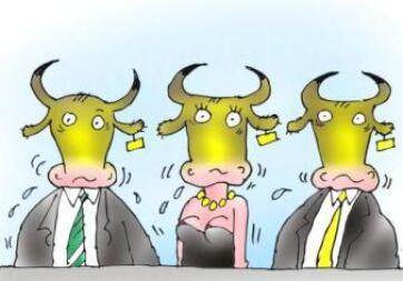 Milyen nemzetiségű a tehén? - A cikkhez tartozó kép