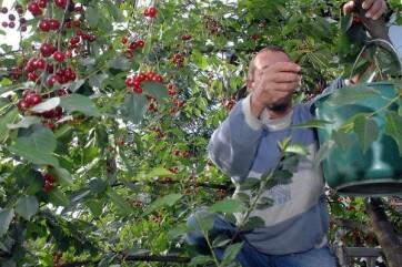 Meghalt két idénymunkás Nova Crvenkán - A cikkhez tartozó kép