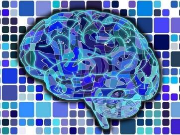 Magyar kutatók térképezték fel az agyi kapcsolatok egyénenkénti változékonyságát - A cikkhez tartozó kép