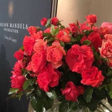 Mandeláról neveztek el rózsát - A cikkhez tartozó kép