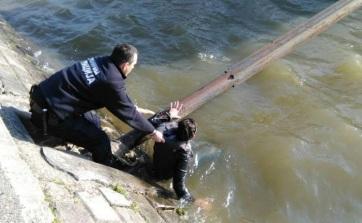 Újvidék: Dunába ugrott egy nő, rendőrök mentették ki - A cikkhez tartozó kép