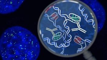 Új DNS-struktúrát fedeztek fel a tudósok az emberi sejtekben - illusztráció