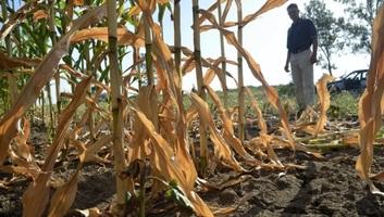 Háborognak a vajdasági gazdák a lecsapolási illeték miatt - illusztráció