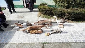 Szilágyi: Védett madarak tartásáért megbüntették a vadászegyesület elnökét - illusztráció