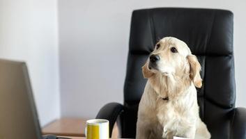 A kutyák képesek leolvasni az érzelmeket az arcról - illusztráció