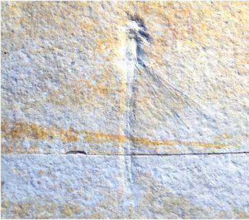 A dinoszauruszok helyi kortársait is bemutatják Szegeden - A cikkhez tartozó kép
