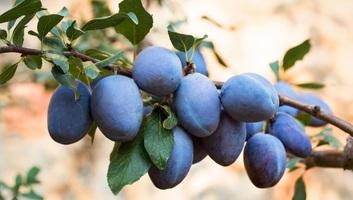 Egyes zöldségek és gyümölcsök segítik megvédeni a bőrt napozás közben - illusztráció