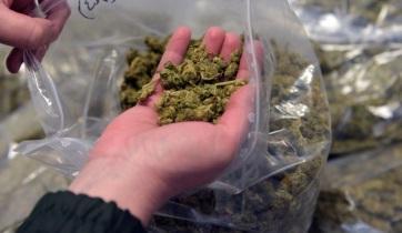 Tizenhárom kiló marihuánát találtak a pénzügyőrök Röszkén - A cikkhez tartozó kép