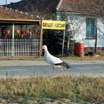 Nyolcadjára telel Ásotthalmon egy gólya - A cikkhez tartozó kép