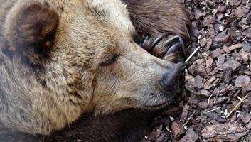 Hogyan élik túl az állatok a téli álmot? - illusztráció
