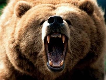 Medve támadt egy vadászaton levő magyar állampolgárra Székelyföldön - A cikkhez tartozó kép