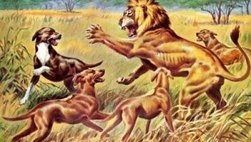 A kutya már több mint 11 ezer éve segíthetett vadászni az embernek - illusztráció