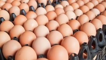 Számozni fogják a tojásokat, nem lesz többé B osztályú tojás a forgalomban - A cikkhez tartozó kép