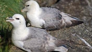 Műanyagból származó adalékanyagot találtak északi-sarkvidéki madár tojásaiban - illusztráció