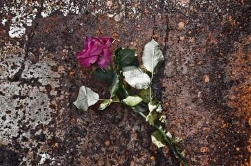 Rózsák és pofonok - A cikkhez tartozó kép