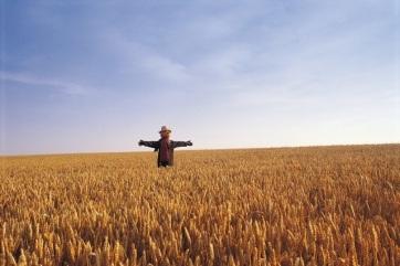 Szerbia: Csökken a kukorica és a búza ára - A cikkhez tartozó kép
