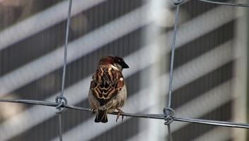 Vészesen csökken a madárpopuláció - illusztráció