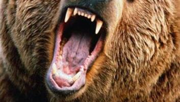 Halálos medvetámadás történt a székelyföldi Kőrispatakon - illusztráció