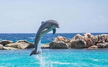 Megsínylik a delfinek is a klímaváltozást - A cikkhez tartozó kép