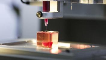 Sejtekkel és véredényekkel is rendelkező szívet nyomtattak izraeli tudósok - illusztráció
