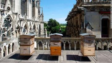 Csodával határos módon életben maradtak a Notre-Dame méhei - A cikkhez tartozó kép