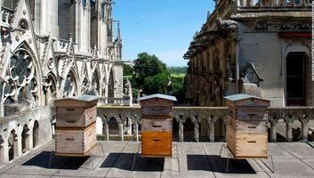 Csodával határos módon életben maradtak a Notre-Dame méhei - illusztráció