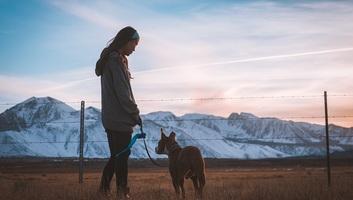 Az ember génjeitől is függ, hogy kutyatulajdonos lesz-e - illusztráció