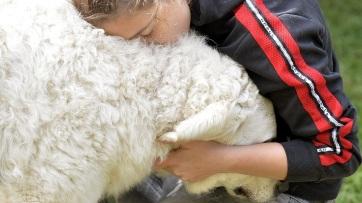 A kutyák tükrözik gazdájuk stresszes állapotát - A cikkhez tartozó kép