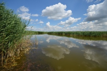 A felmelegedés 17 százalékkal csökkentheti a vizek élővilágát - A cikkhez tartozó kép