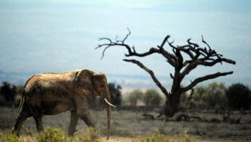 Árverezéssel mentik a vadakat Afrikában - illusztráció