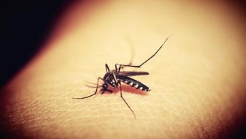 A Görögországba utazók figyelmébe: Védekezzenek a szúnyogoktól a nyugat-nílusi vírus miatt! - illusztráció