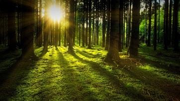 Az erdőtelepítés lehet a leghatékonyabb megoldás a globális felmelegedésre - A cikkhez tartozó kép