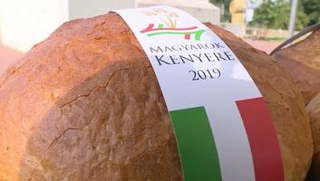 Megkezdődött a Magyarok Kenyere - 15 millió búzaszem program - illusztráció