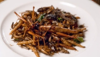 Egyes ehető rovarok olyan gazdagok antioxidánsban, mint a friss narancslé - illusztráció