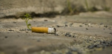 A talajba kerülő cigarettacsikkek gátolhatják a növények fejlődését - A cikkhez tartozó kép