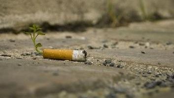 A talajba kerülő cigarettacsikkek gátolhatják a növények fejlődését - illusztráció