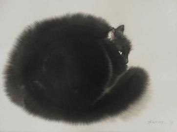 Macskapcsolat - A cikkhez tartozó kép