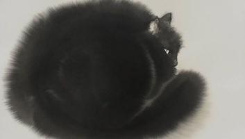 Macskapcsolat - illusztráció
