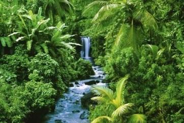Bolsonaro: Brazíliának nincs szüksége az amazonasi esőerdő fenntartására szánt német támogatásra - A cikkhez tartozó kép