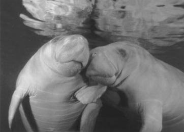 Az amerikai kormányzat lazít a veszélyeztetett fajok védelmén - A cikkhez tartozó kép