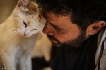 Újra akcióban az aleppói macskamentő - A cikkhez tartozó kép