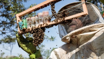 Több mint 500 millió méh pusztult el Brazíliában - illusztráció