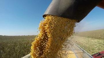 FAO: Csökkentek a világpiaci élelmiszerárak augusztusban - A cikkhez tartozó kép