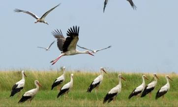 A klímaváltozás hatására egyre több gólya marad itthon télen - A cikkhez tartozó kép