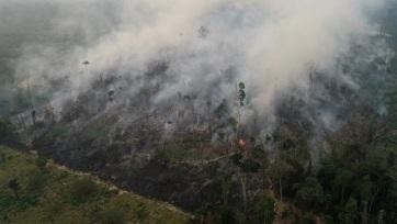 Az amazóniai erdőirtás jelentősen növeli a térség hőmérsékletét - A cikkhez tartozó kép
