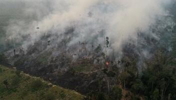 Az amazóniai erdőirtás jelentősen növeli a térség hőmérsékletét - illusztráció