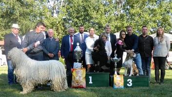 Topolya: Nemzetközi kutyakiállítás lesz a vásártéren - illusztráció
