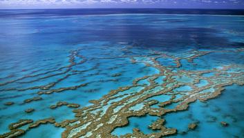 Új módszer a korallzátonyok pusztulásának megfékezésére - illusztráció
