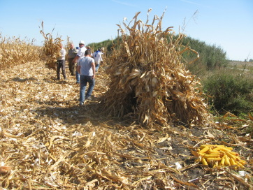 Kukoricafesztivál volt Tordán - A cikkhez tartozó kép