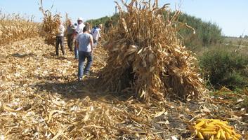 Kukoricafesztivál volt Tordán - illusztráció